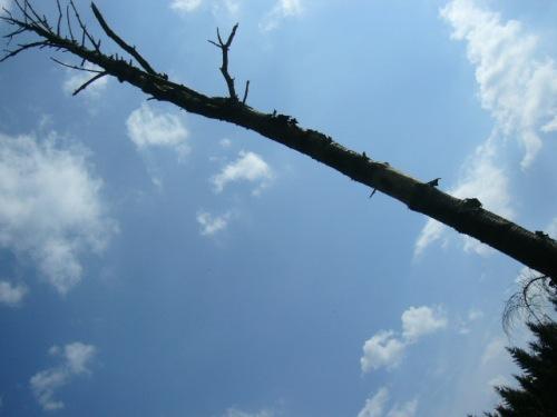 letzten Sonntag hier im Wald photographier, (c) 2009 TW