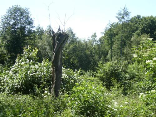 Wald bei Tiefendorf